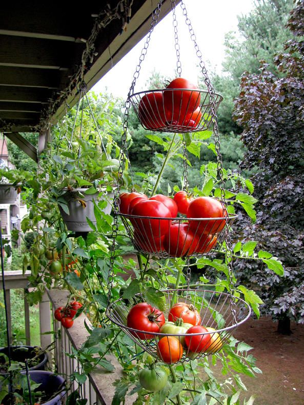 Unique Apartment Vegetable Garden Inside Decorating Ideas