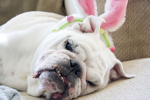 These Bunny Ears Are Exhausting!