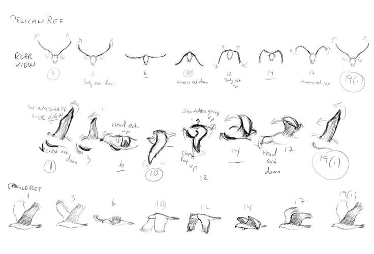 Bird Flying Cycle Google Search Fly Drawing Bird Drawings Animation Reference