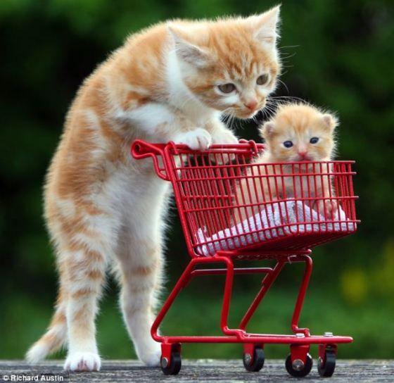 Orphan Kittens Shopping For Good Homes Love Meow Cute Baby Animals Cute Animals Baby Animals