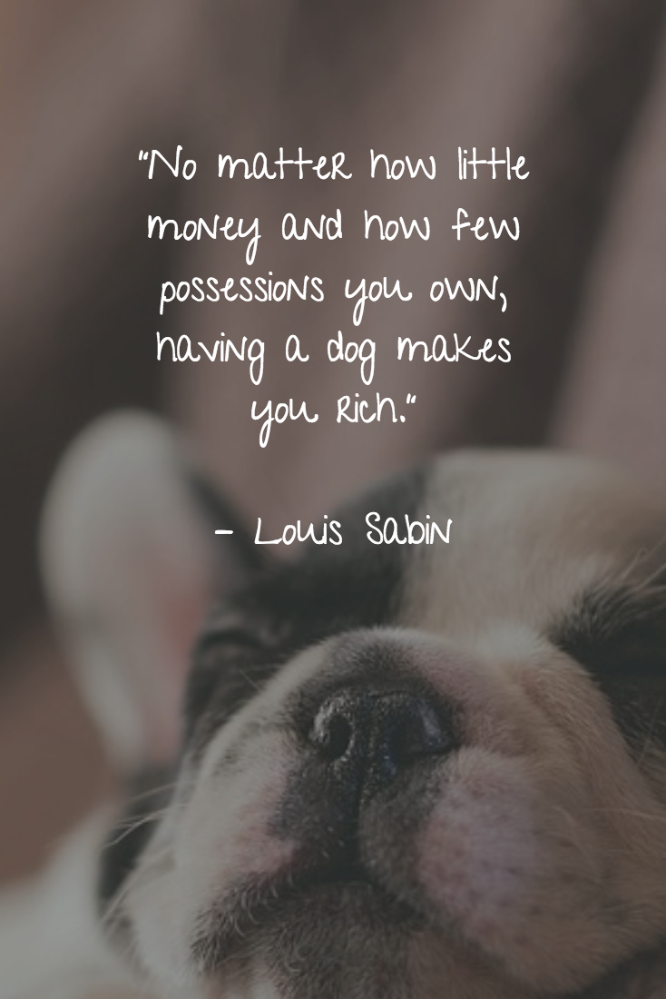 25 Dog Quotes About Love And Loyalty Puppy Quotes Dog Quotes Cute Dog Quotes