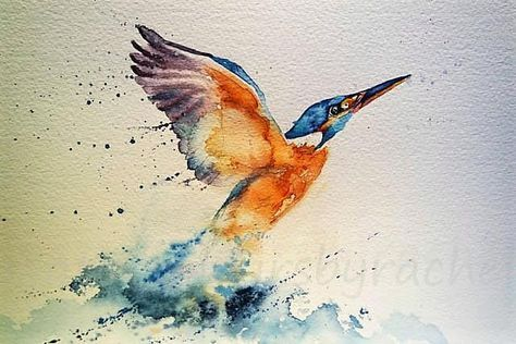 Kingfisher in 6 easy steps is part of Watercolor paintings easy, Watercolor birds tutorial, Kingfisher painting, Bird watercolor paintings, Kingfisher watercolor, Watercolor paintings - I have had a wonderful week this week as I have had complete freedom to paint just what I wanted  I have a few new pieces to share with you in the coming days but a subject i return to time and again is movement  I love birds and the way they move and a favourite of mine is the king fisher   1  Find an image of a kingfisher and draw it as carefully as you can  I often use pixabay as a source of images or I have some friendly photographer friends who help me too  2  Now it is time to get painting  I like to make sure I have everything I need   Fresh water, kitchen roll, my paintbrushes in easy reach  I also tape the paper to the board with masking tape  I use bockingford watercolour paper and Winsor and Newton paints  I have no secret formula but I always start with the eye, I like to get to know my subject and once he has an eye he has a personality  3  Now I like to splash some masking fluid around  Much as you splatter paint but it is gloopier and less willing to cooperate  Also watch your clothes it is tricky to get off  4 So let the masking fluid dry completely and you can paint all the details on the head and the beak  The kingfisher has such amazing colouring so don't be shy  I use indian yellow, phthalo blue, veridian , cadmium orange , cerean blue and splashes of clean water to get the textures  Be careful to know where you want the colours study the bird carefully  5 Now carry on down the body but you can be much freer with the wing  I use a mixture of cadmium red and cobalt blue to paint the wing and I use lots of water and brush strokes in the direction of movement I want  You also need to be aware of where the bird emerges from the water, keep these lines very blurred with lots of water  6  Now to go a bit mad, be like the water  I use indigo and phthalo blue mixed together and create the water effect with strong paint and lots of water  Finally let it dry completely and I splatter some white acrylic on for good measure  Now wait for it to dry again and rub off your pencil lines          and hey presto your kingfisher is complete!
