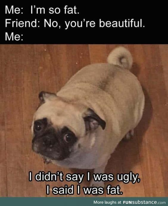 New Funny Dogs 17 Funny Dog Memes Scroll through these hilarious funny dog memes when you need a pick-me-up. Today we've rounded up the best funny dog memes. 3