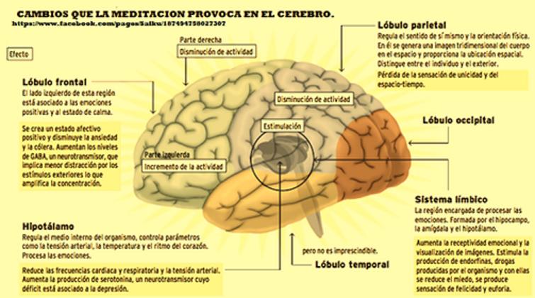 Cambios que la meditación provoca en el cerebro.