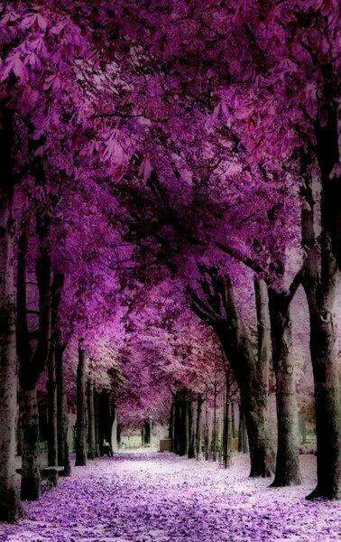 Amazing Purple Beauty Beautiful Nature Nature Beautiful Tree