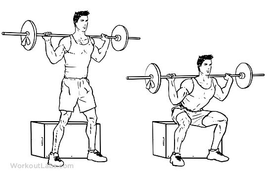 Resultado de imagem para box squats