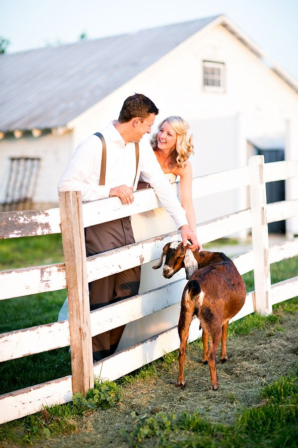 Wedding Pictures With My Farm Animals I Will Have A Picture With