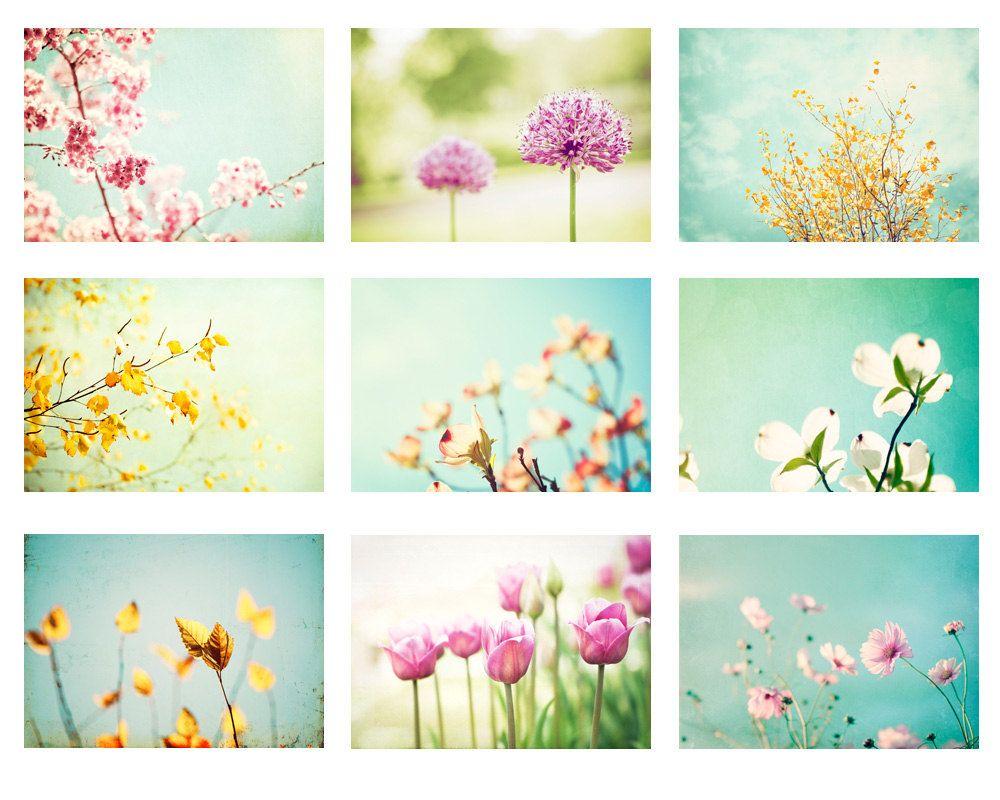 Pastel photo set photographs nine flower photography spring