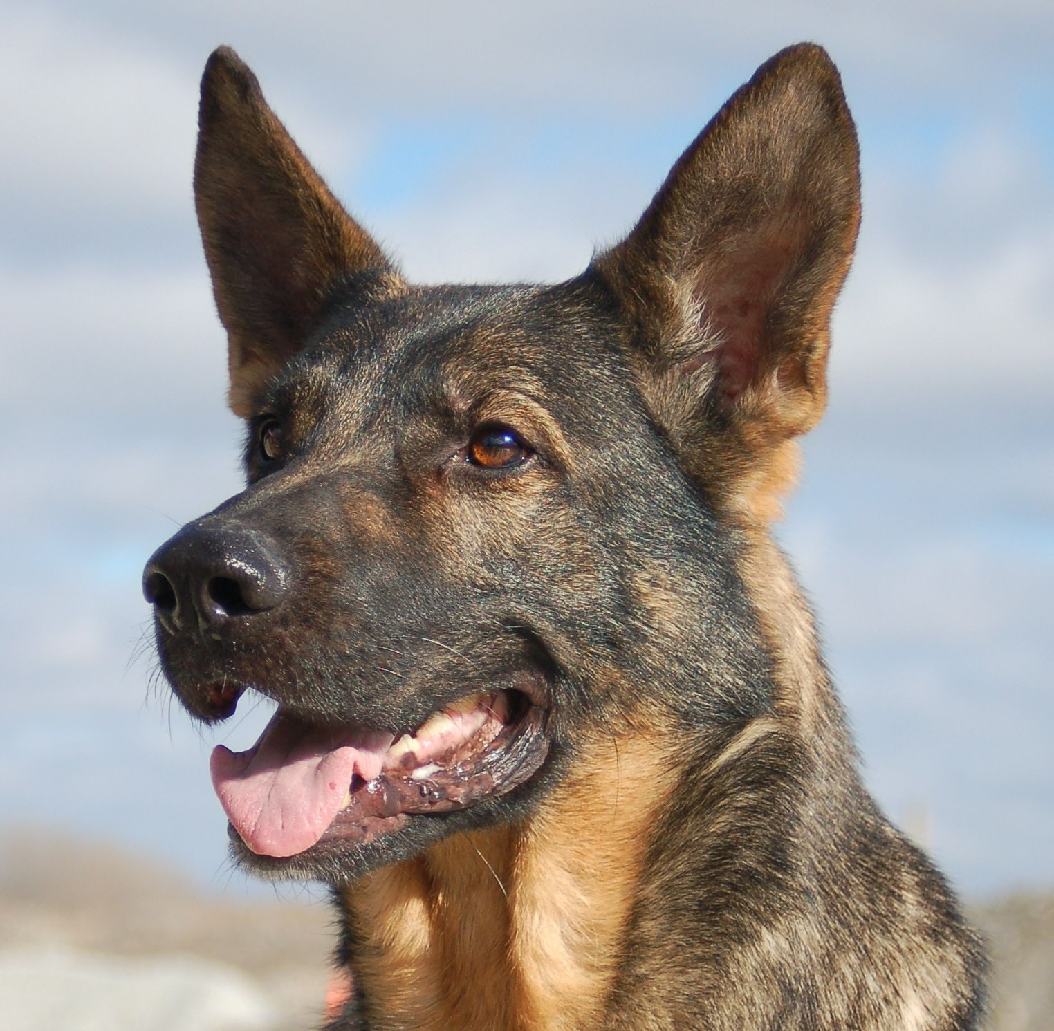 A Dog S Life Reflecting On The Work Of A Canine Hero Doberman Pinscher Dogs Dog Life