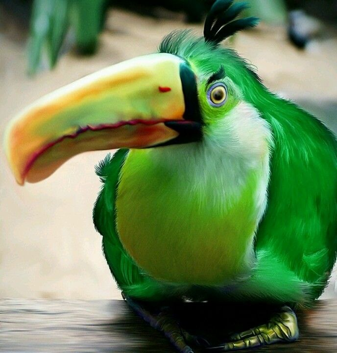 WOWWhat a crazy cool looking bird!! It looks like a