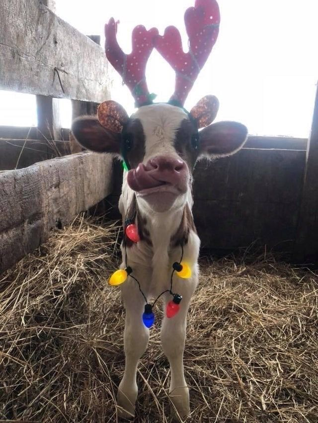 Pin by Sandy Moyer on Celebrate Christmas & Winter joy in