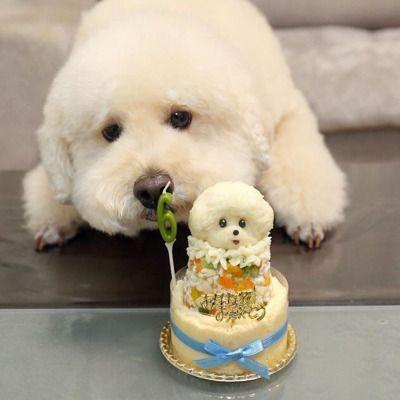 Картинка с днем рождения собака бишон
