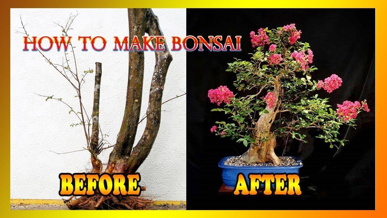 Cara Membuat Bonsai Part Ii Youtube Bonsai Pohon