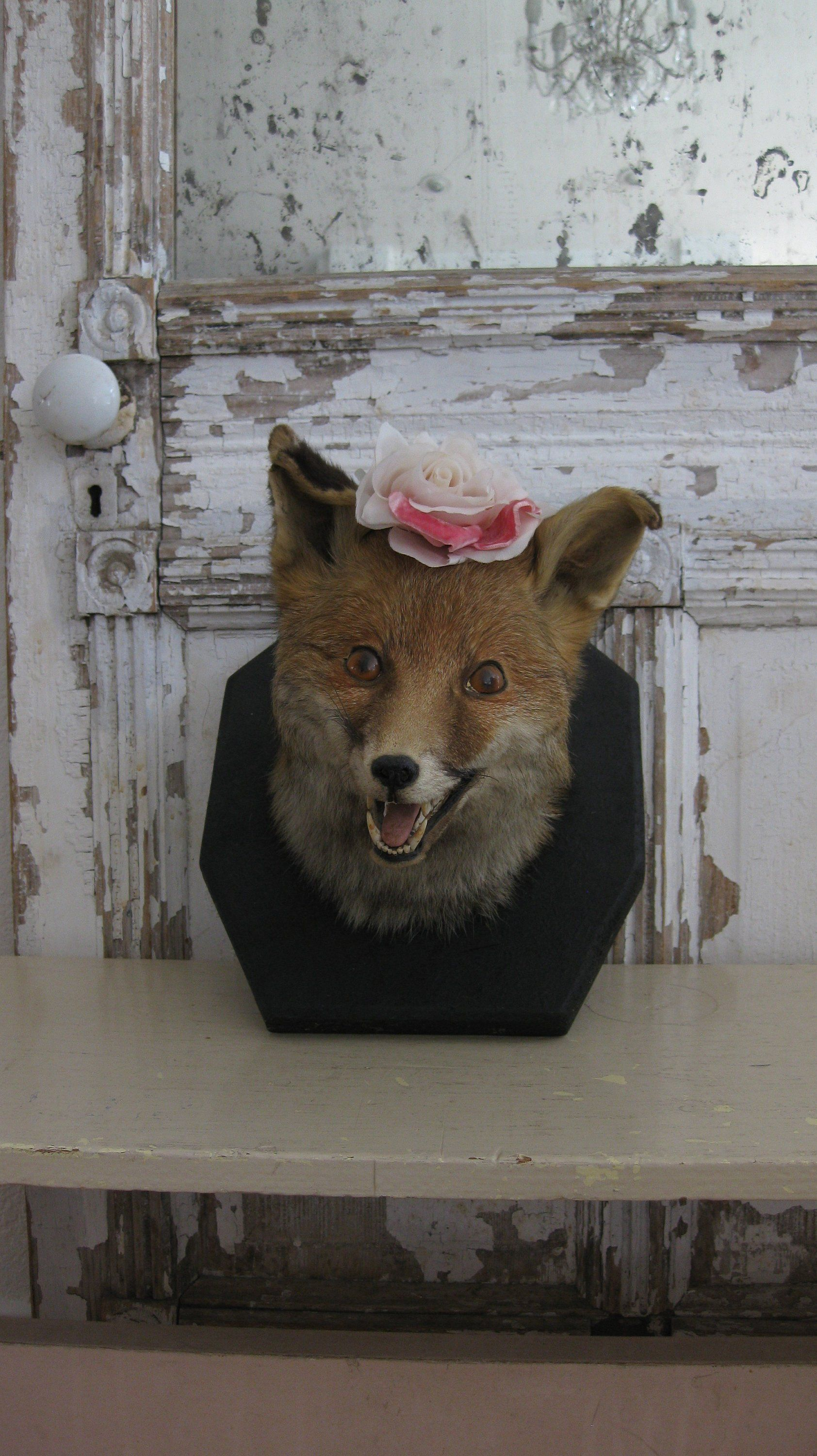 LIFE SIZE /& STUNNING FOR HOME /& GARDEN A FOX HEAD PLAQUE GREAT GIFT