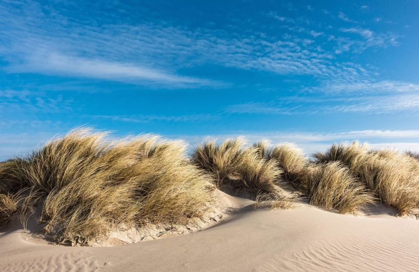 Sand Dunes Wall Mural (With images) Landscape pictures