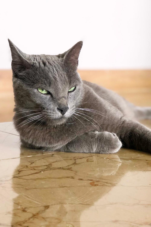 Cuántos Años Puede Vivir Un Gato Gatos Felinos Ciclos De Vida