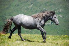 Cavalo selvagem na natureza Imagem de Stock