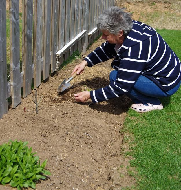 """Gundi Pieper working at one of her beds. Last year, she grew swiss chard, beets and beans along with hostas and flowers. """"The neighbours all got stuff,"""" she said. (Lynn Moar)"""
