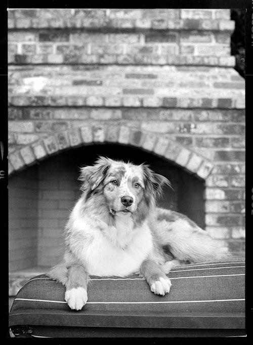 Dog Photography by Jesse Freidin