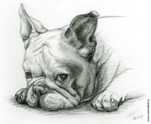 Pin By Sam Bertie On Adog With Images French Bulldog Drawing