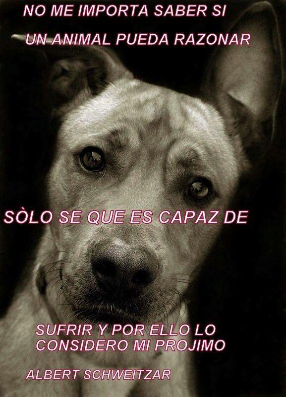 perra amor