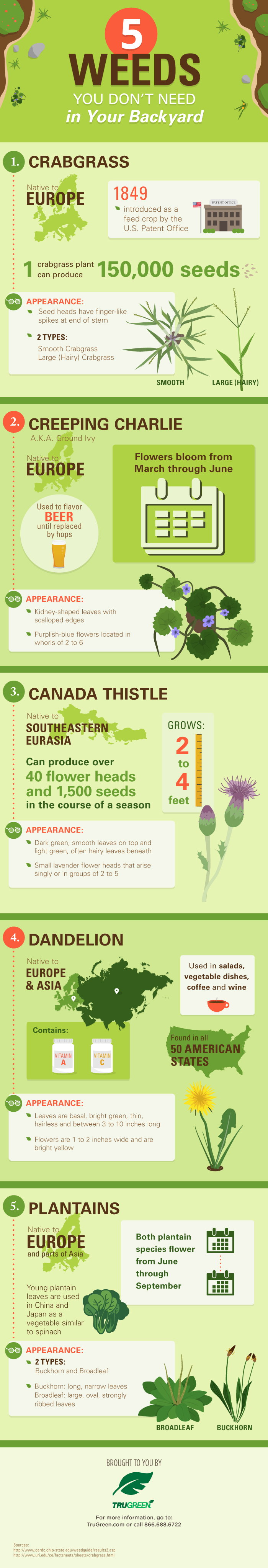 Weed control everything trugreen pinterest weed control and