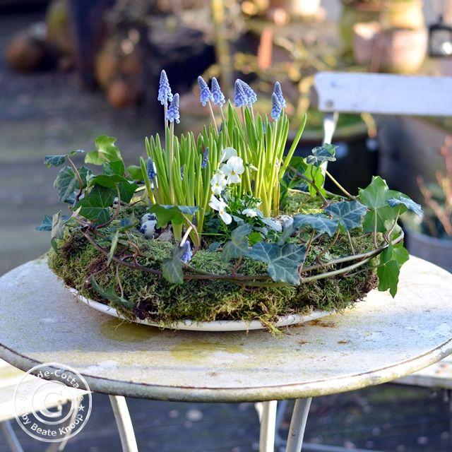 Frühjahrs-Floristik: Mooskranz mit Perlhyazinthen & Hornveilchen - Seaside-Cottage
