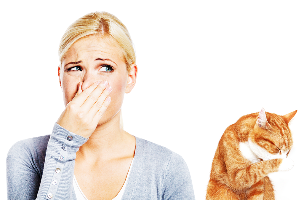 Get yours today!! Cats smelling, Cat urine smells, Cat urine