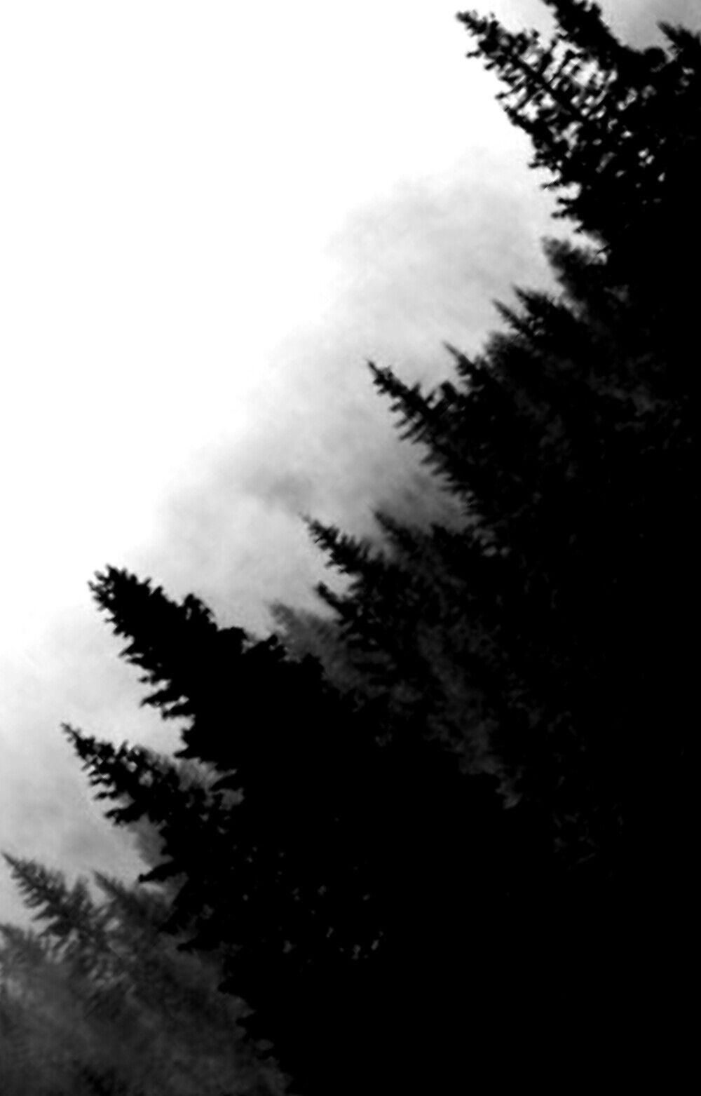 ???? ????? ????...  PicsArt Tutorials [Completed] - 27 / creepy forest