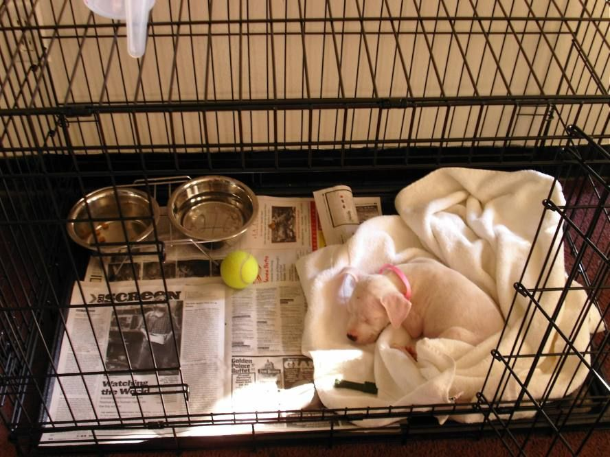 How To Take Care Of Your New Puppy Part 1 Training Your Puppy