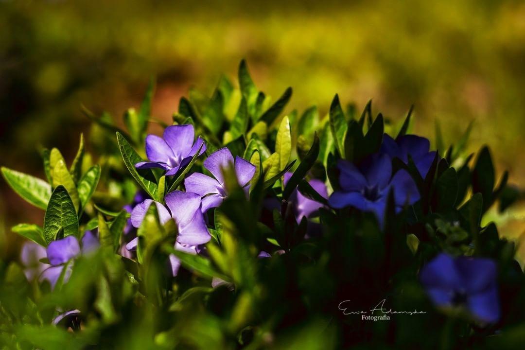 Kwiaty Wiosna Wiosna2019 Przyrodapolska Przyroda Naturephotography Nature Flowers Spring Kwiaty Wiosna Wiosna2019 Przyrodapolska P Plants Flowers