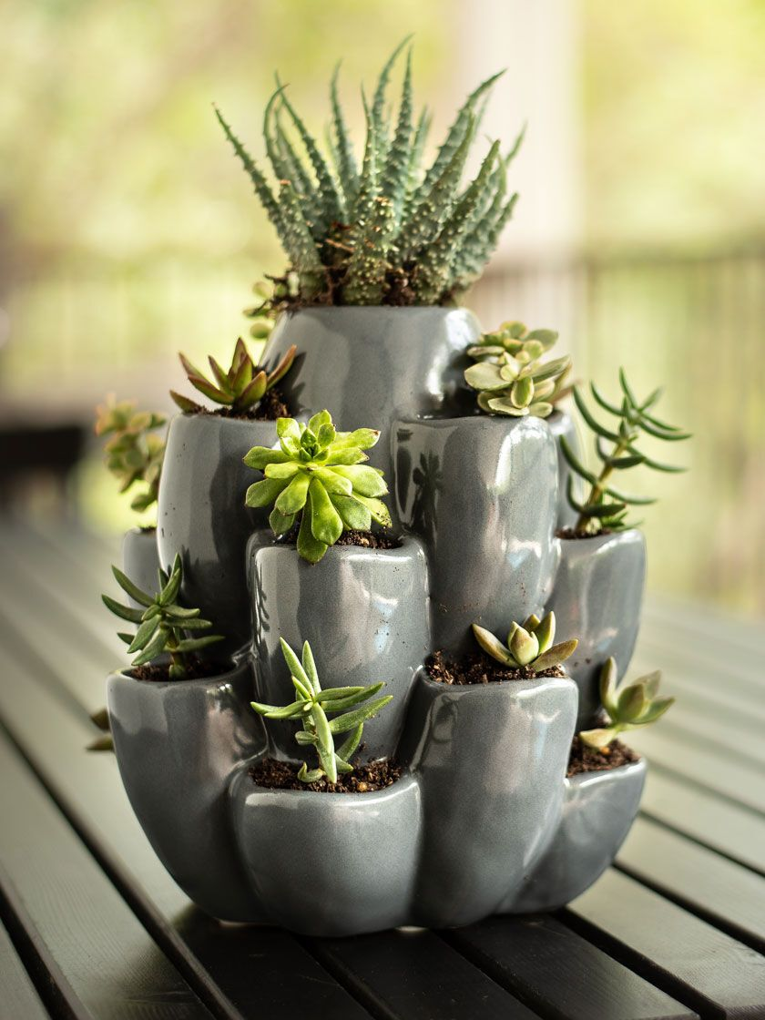 Exaco Ceramic Succulent and Cacti Planter | Gardener's Supply