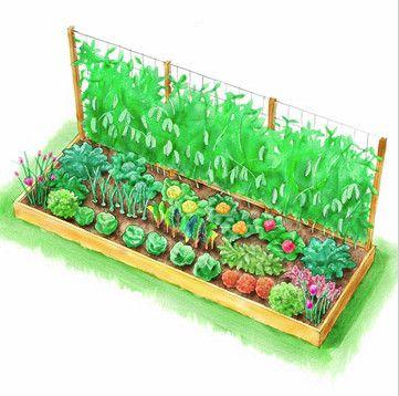 COTTAGE AND VINE: vegetable garden