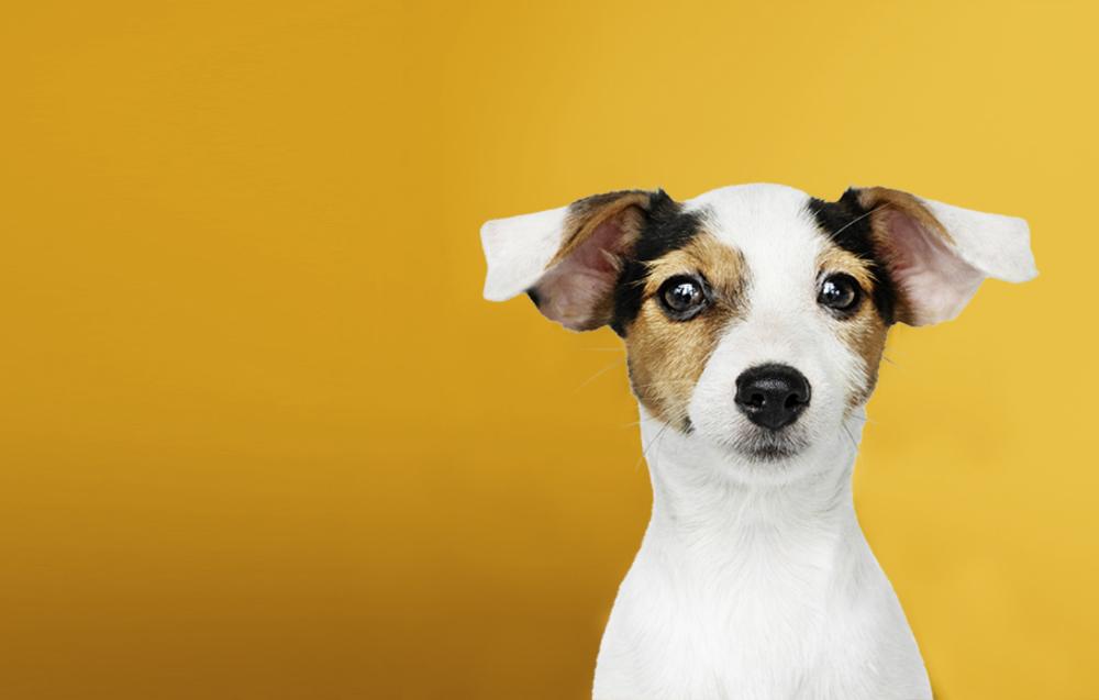 Wagmo Io Pet Wellness That Doesn T Break The Bank In 2020 Pet Wellness Pets Wellness