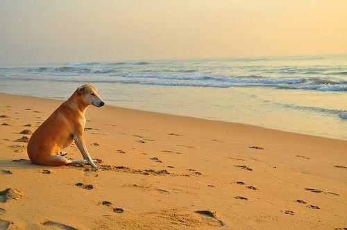 Dog Dog Photography Dog Background Dog Photos