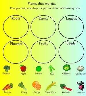 Plants, Flowers and Seeds topic, EYFS ,KS1 teaching resources ...