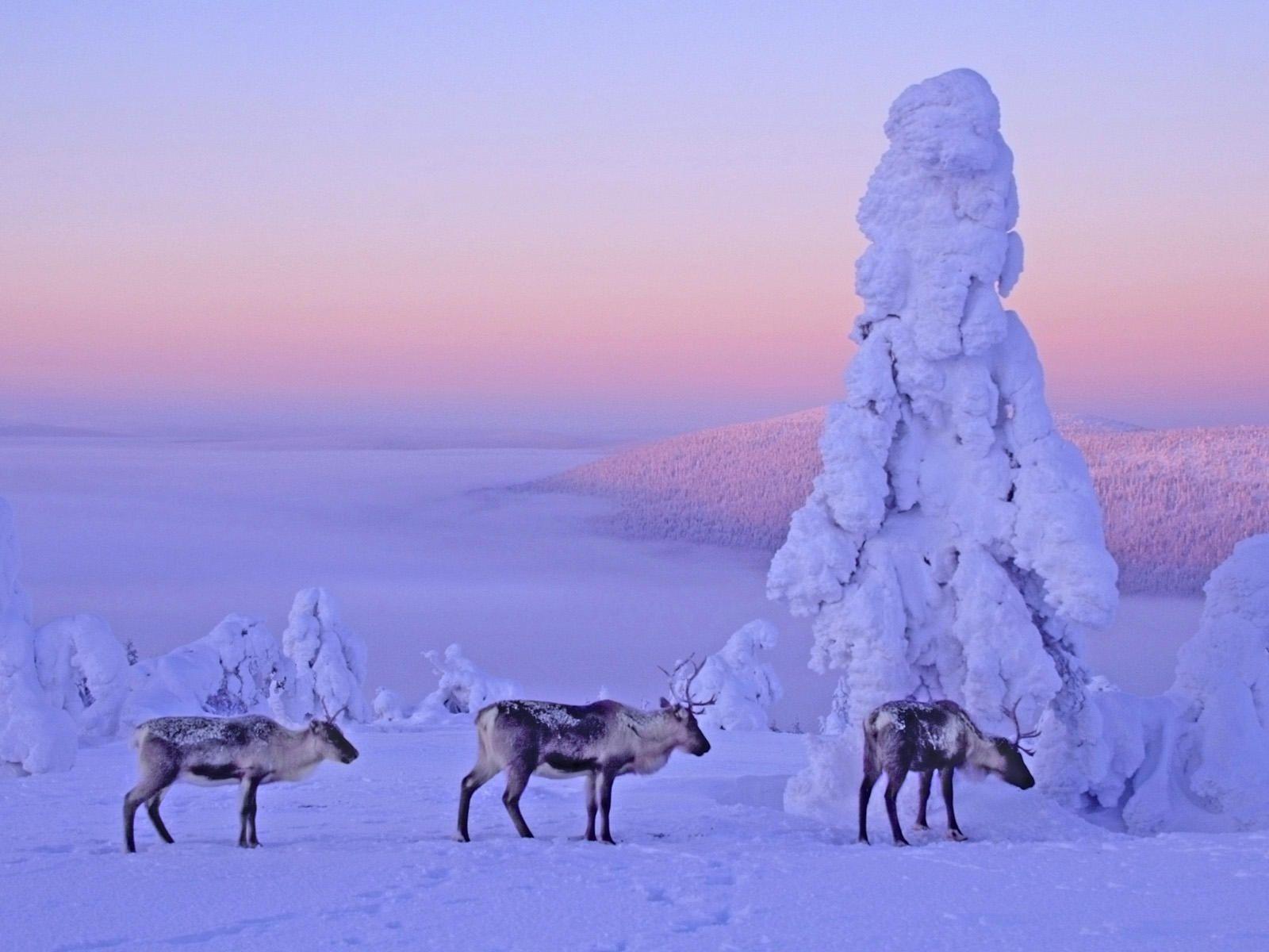 Csodás fotók, melyek alapján Finnország a legvarázslatosabb hely télen