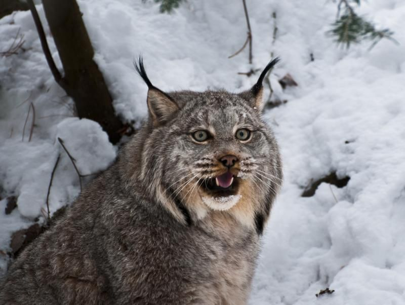 10 wildcats that prove felines are the cutest animals