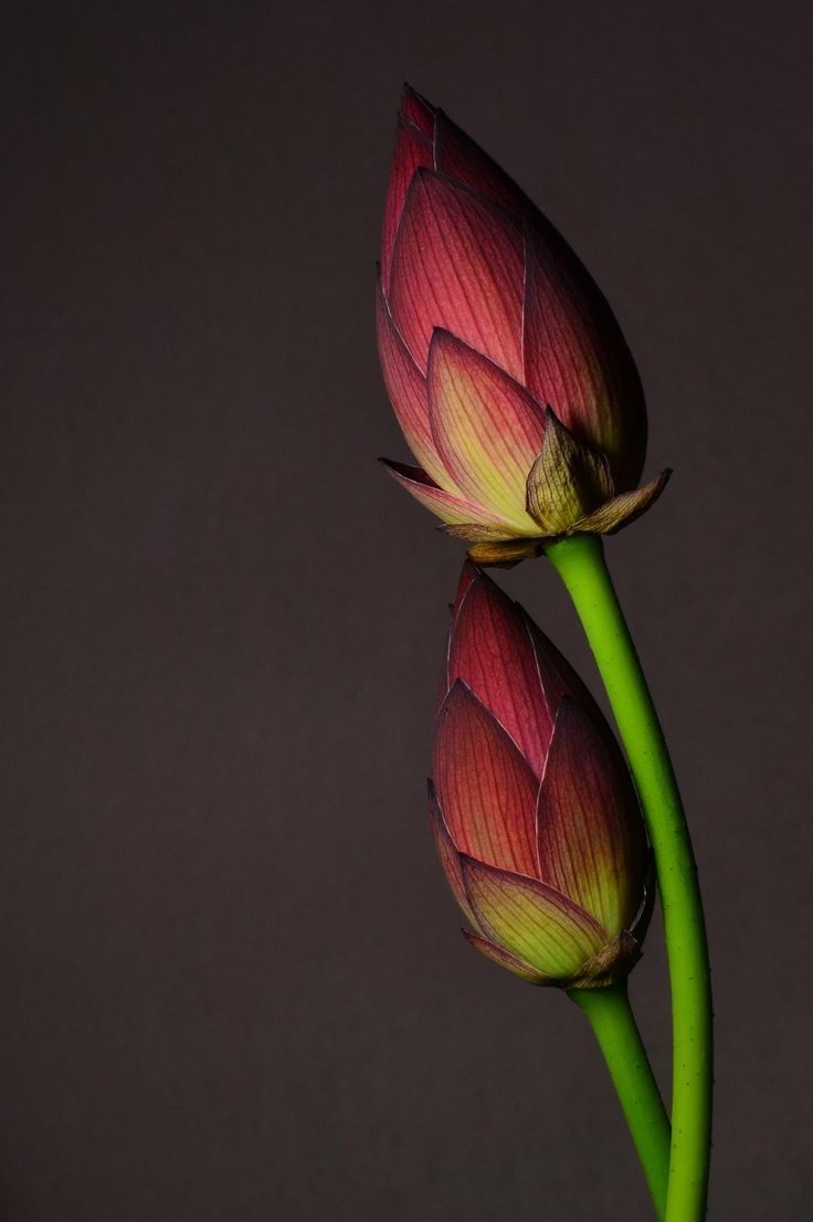 Pin by Yuliën Yanto on Bloemen | Pinterest