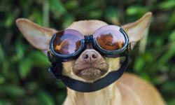 Doggles are no joke. Efforts are under way to supply these to search-and-rescue dogs. #howstuffworks