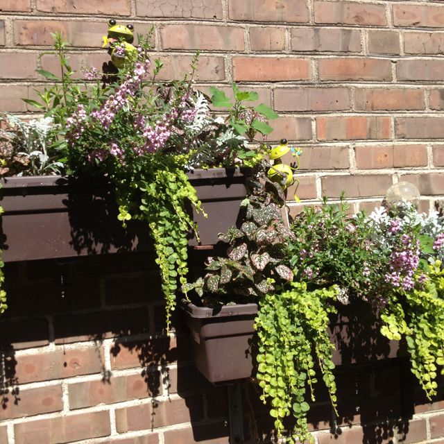 Window boxes (with cute frogs and solar bulbs!)