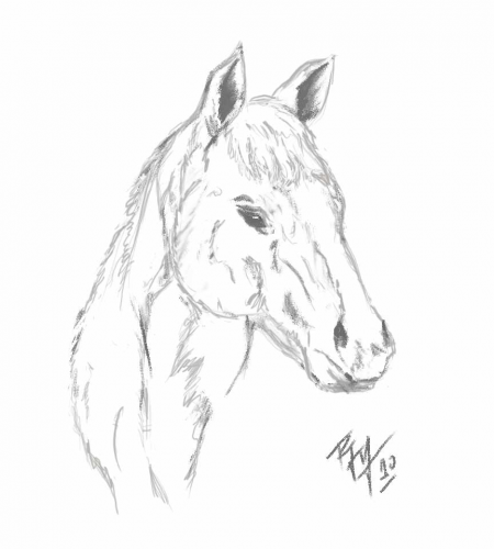 dibujos de caballos  Buscar con Google  caballos  Pinterest