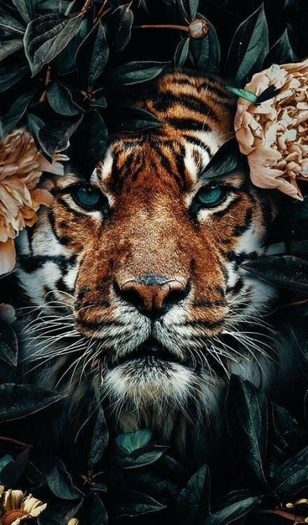 Pin By Angele Francois On Tatoo Tigre In 2020 Tiger Wallpaper Tiger Photography Animal Photography Wildlife