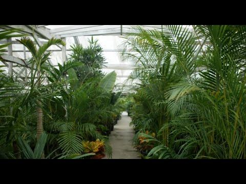 Garden Nursery Plants Plant And Tree Local Ur