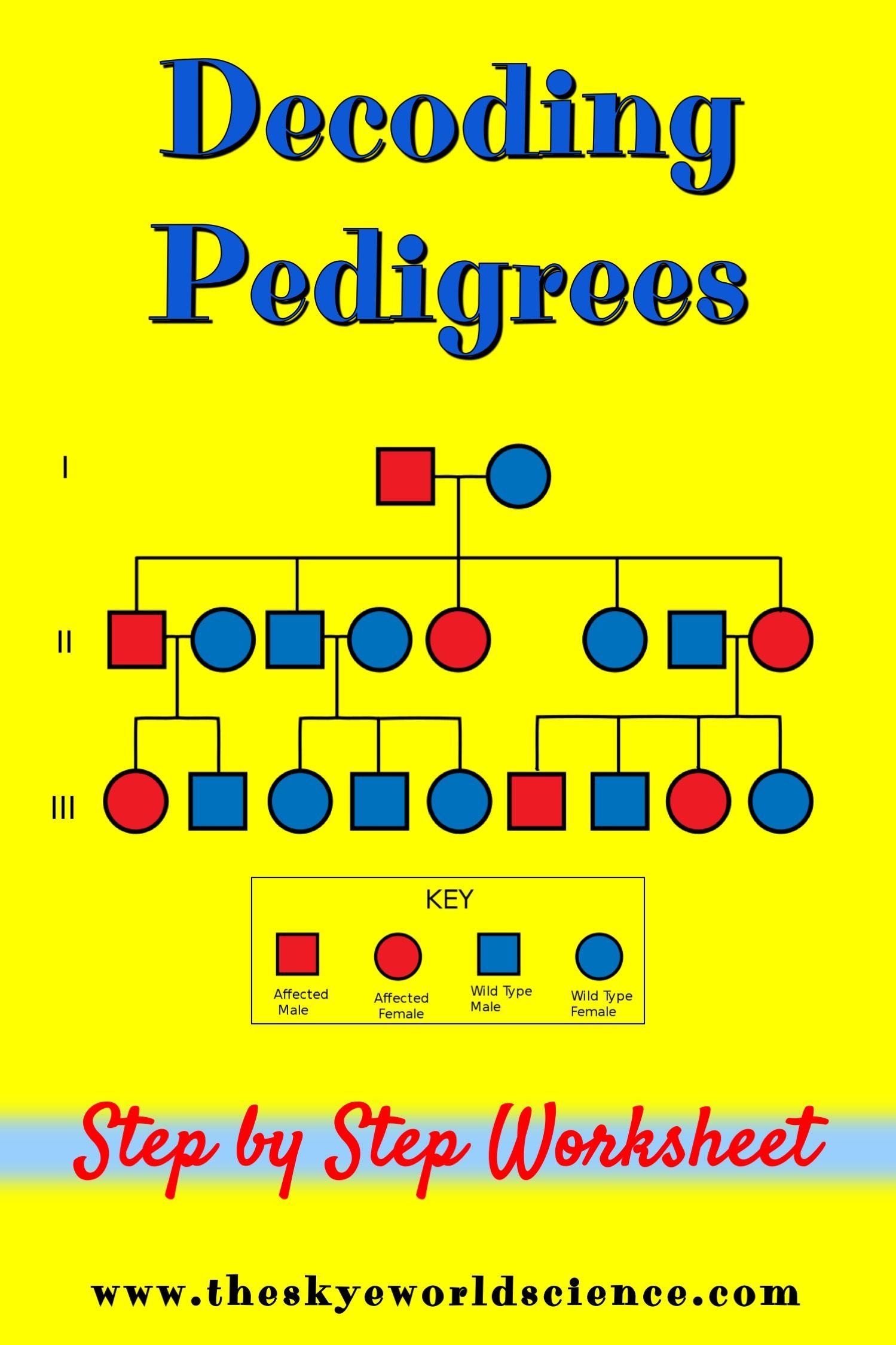 Decoding Pedigrees Worksheet
