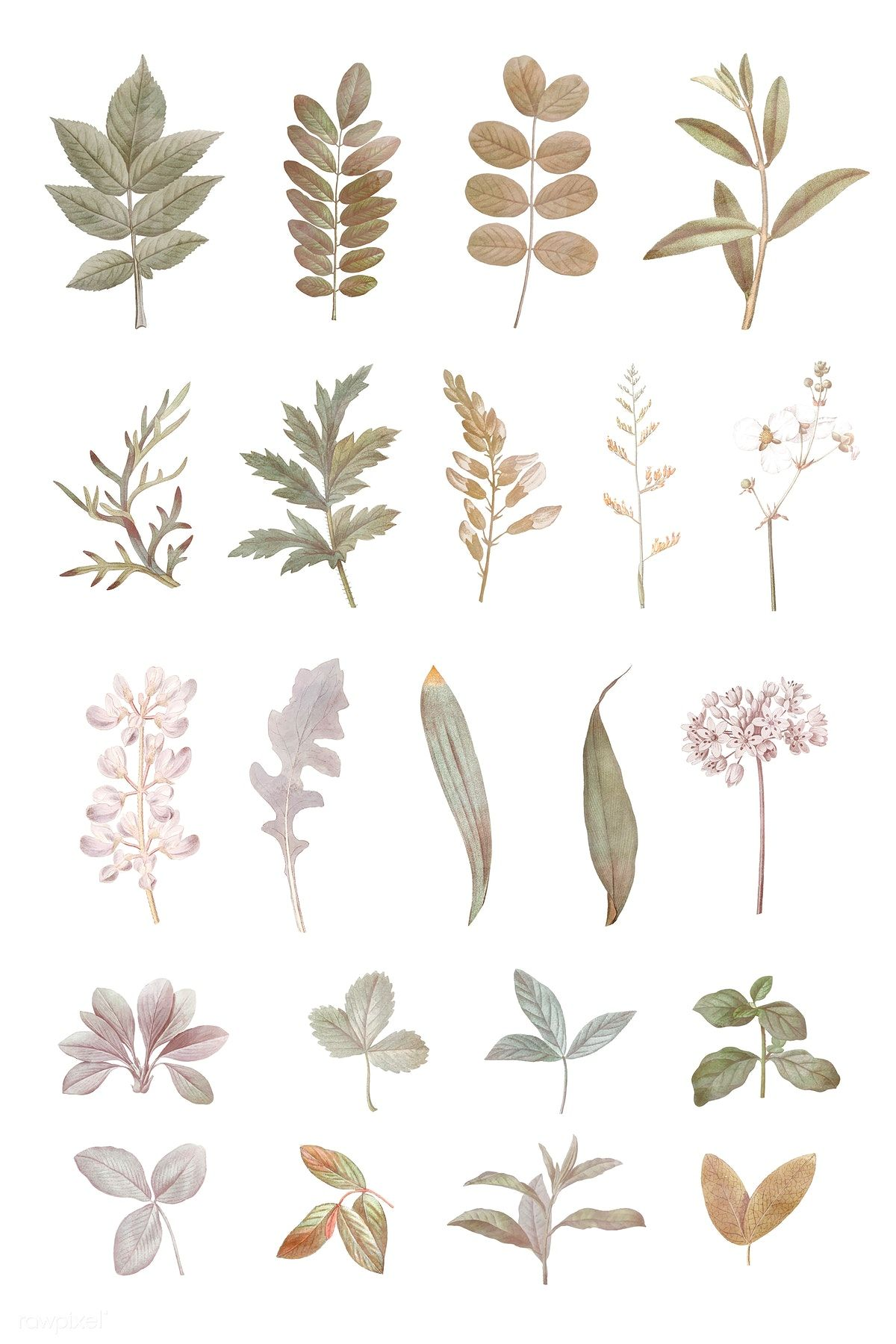 Download premium vector of Foliage design elements