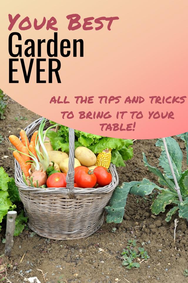 b9000d23e034ea21d1dfc4dea0194ec7 - Expert Gardener Organics Vegetable & Tomato Food