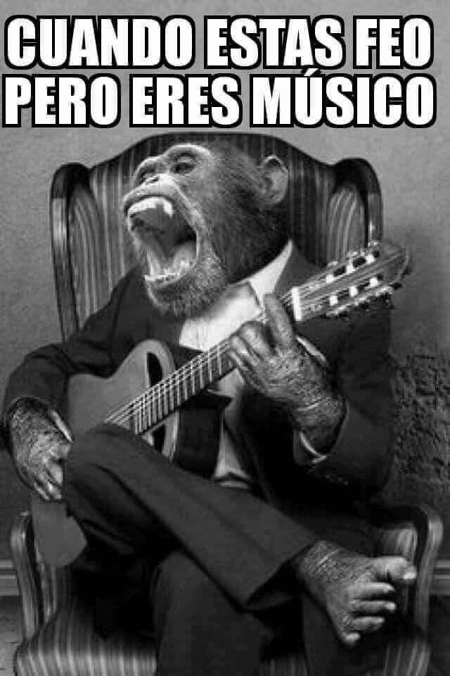 Feo Musico Memes Animales Chistosos Fotografía Animal Y Animales