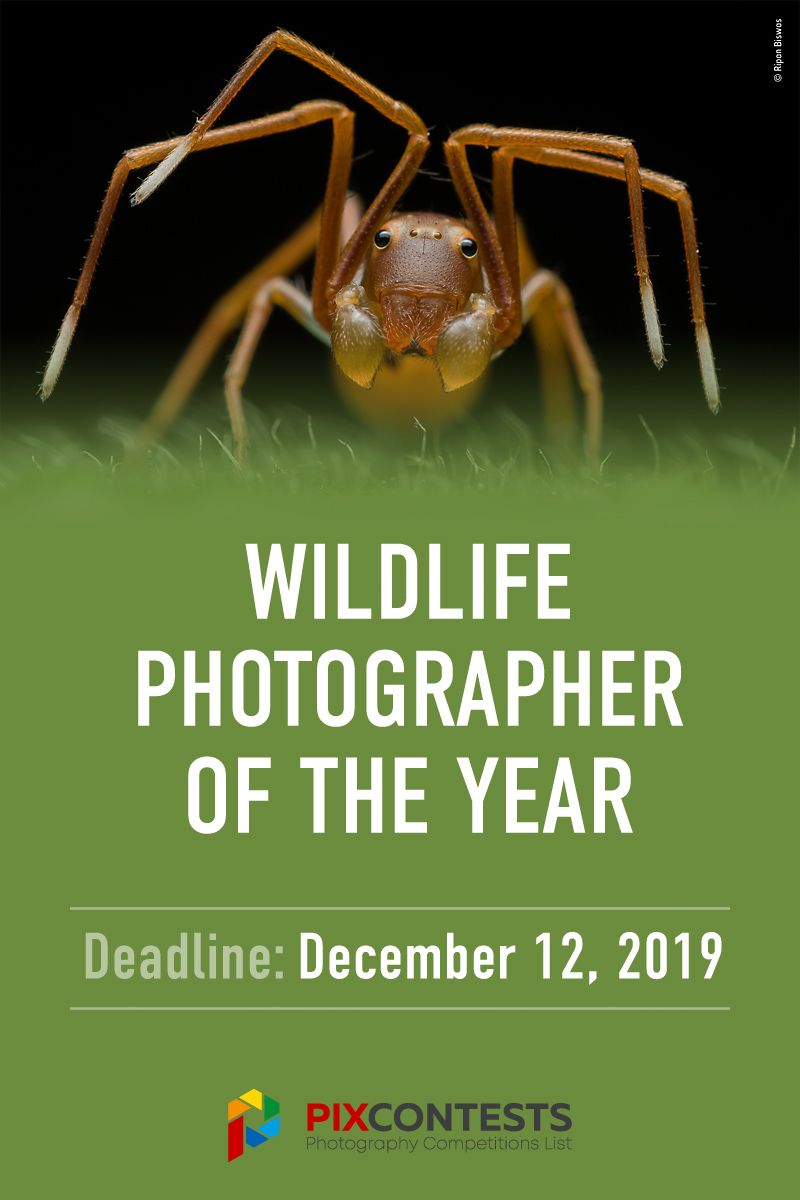 Wildlife Photographer Of The Year 2020 Photography Competitions Photography Contests Photographer