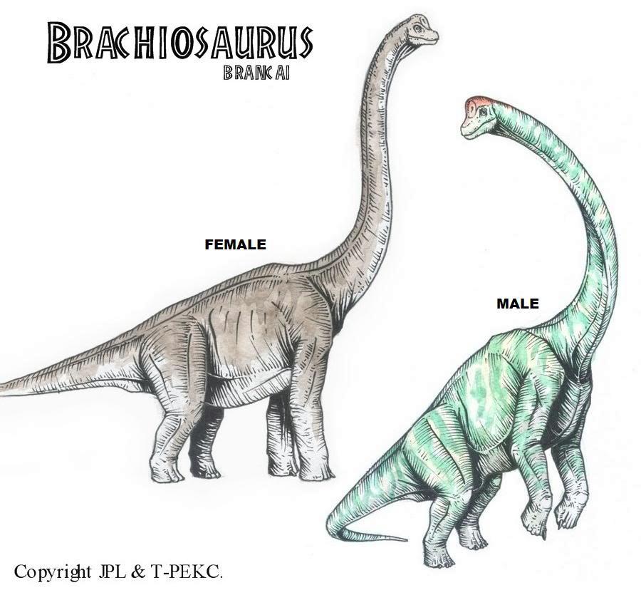 Brachiosaurus Vs Brontosaurus | www.pixshark.com - Images ...